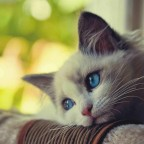 Sad-Cat-1-1860