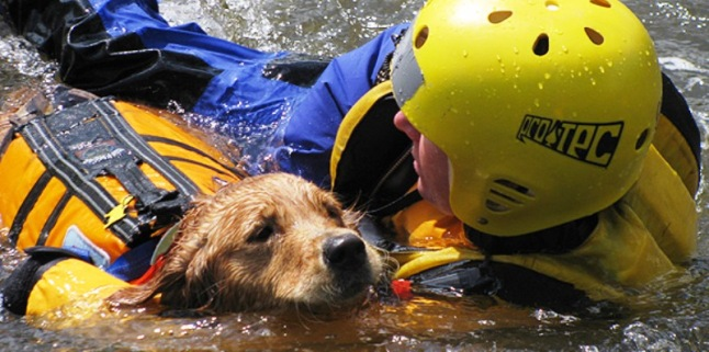 TAR-dog-rescue