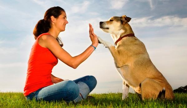 5 Cosas Que Los Perros Nos Enseñan Y Podemos Aplicar